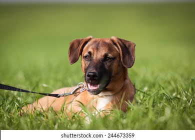 summer photo of dog lying on the grass