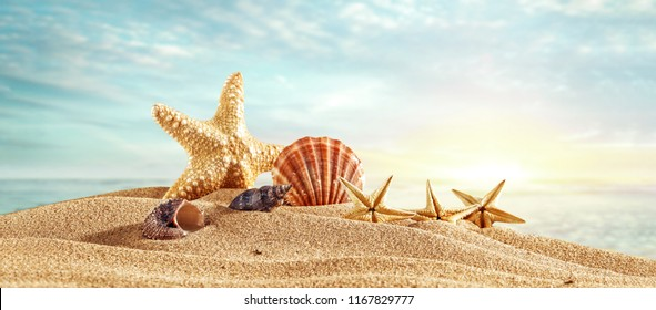 Summer photo of shells on beach and free space for your decoration
