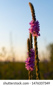 Summer Prairie wildflowers on a beautiful Summer afternoon.  Dixon Waterfowl Refuge, Hennepin, Illinois