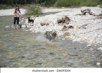 Summer pure joy with dogs in water. Dog is running with full speed in the river and entertain his owner in background.