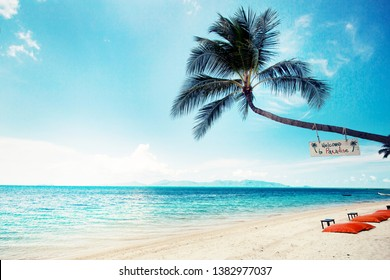 Summer relax background with palm