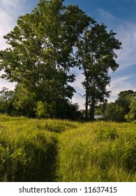 Summer river bank with blue sky and path in the grass