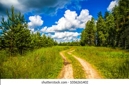 Summer rural forest road way landscape