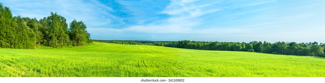 summer rural landscape a panorama with a field and the blue sky. agriculture