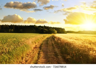 Summer rural landscape with way in field at sunset.