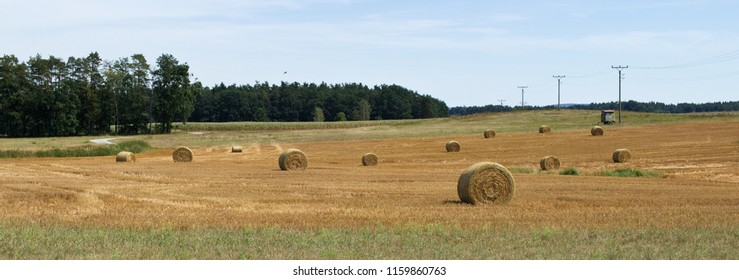 Summer rural landscpae. Golden bales with hay. Forest. Electricity pylons. Electricity poles. Electricity posts.