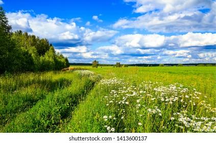 Summer rural meadow field landscape. Meadow flowers summer nature. Summer nature background. Summer meadow flowers field view