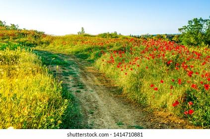 Summer rural road in meadow flowers. Meadow flowers road in summer. Summer meadow flowers road. Summer rural road view