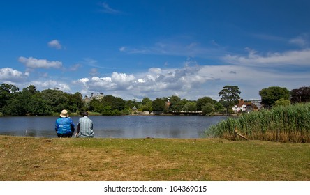 Summer scene on the riverbank in the New Forest