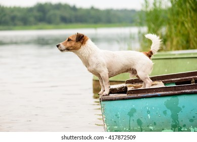 Summer scene: wet dog standing on river boat