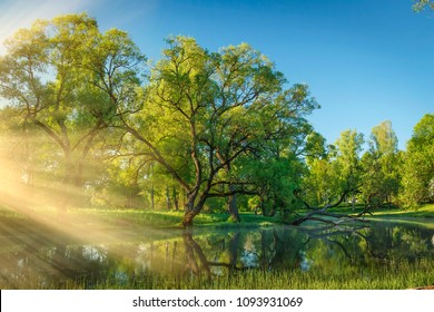 Summer scenery of beautiful green nature in clear sunny morning with side sunlight, rays through fog over surface of river. Trees are reflected in water. Natural landscape perfect wild nature