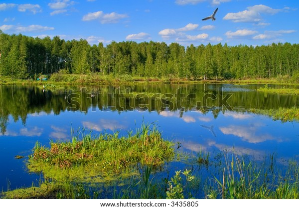 Summer scenery with lake in front, green forest on back and a flying gull.