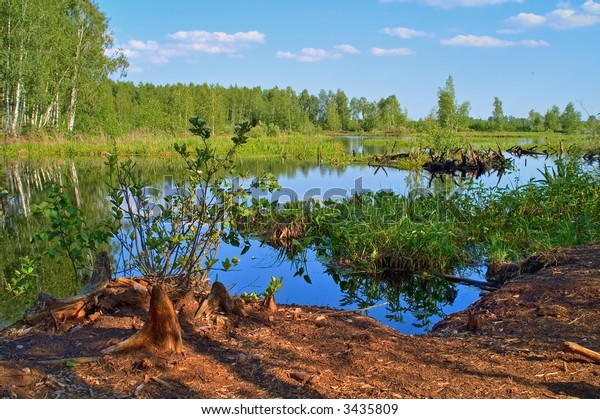 Summer scenery with lake in front and green forest on back.