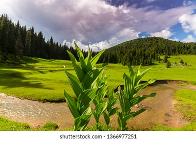 Summer scenery in the mountains, on a bright sunny day, with a lush green meadow, fir trees and storm clouds