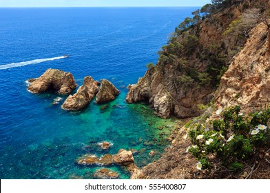 Summer sea rocky coast landscape with white flowers (Spain). View from above.