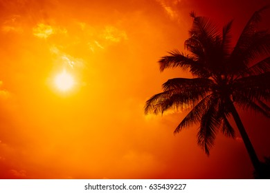summer season at the beach, silhouette palm tree with clear sunny sky with extreme hot sunshine day background.