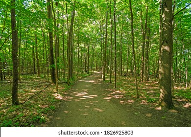 Summer Shade and Sun on a Forest Path in Sleeping Bear Dunes National Laekshore in Michigan