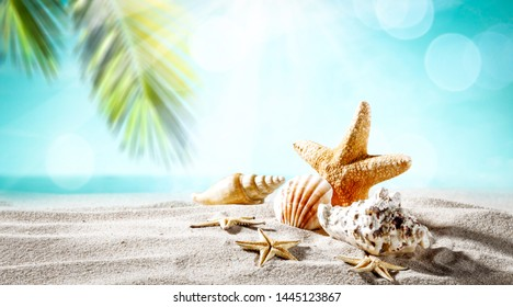 Summer shell on sand and landscape of palms with sea and beach.