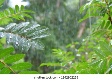 summer shower in the dense forest, close-up, water droplets fixed on green leaves, dotted lines of rain jets in the background
