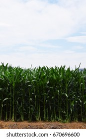 Summer Sky and corn field/background material