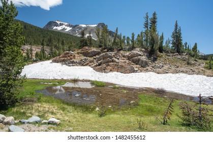 Summer Snow In Yosemite National Park