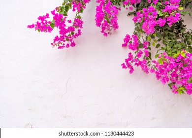 summer spanish bougainvillea flowers on white wall