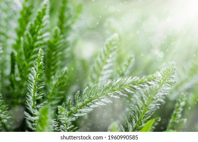 Summer or spring background with fresh green grass with sunbeams. An image of purity and freshness of nature.