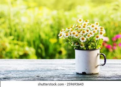 Sommer- oder Frühlingsmarschgarten mit blühenden Blumen