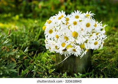 Summer or spring beautiful garden with daisy flowers