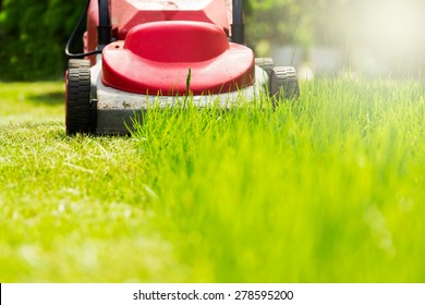 Summer and spring season sunny lawn mowing in the garden.