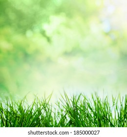 Summer or spring sunny nature with growing grass