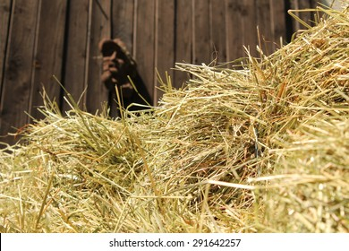 Summer Straw with Barn Wall
