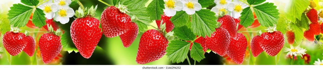 summer strawberries background