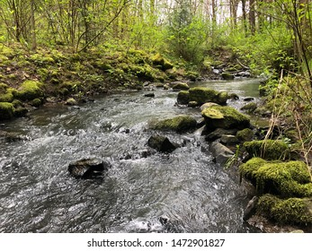 Summer stream though a forest