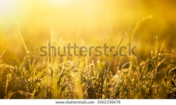 Summer, summertime concept - green grass in the golden sunrise - web banner with blank, copy space