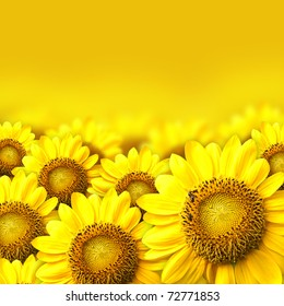 Summer sun over the sunflower field