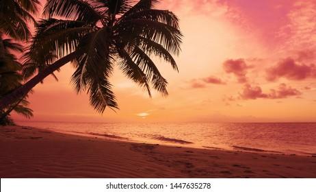Summer sun sundown on palms beach coast seascape. Atlantic Ocean palm trees beach sundown sea. Orange sky reflected in waves of Caribbean sea. Amazing summer nature sundown background. Idyllic shore