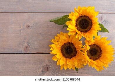 Summer sunflowers on a wooden background with space