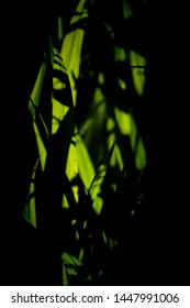 Summer sunlight on green leaves in the dark