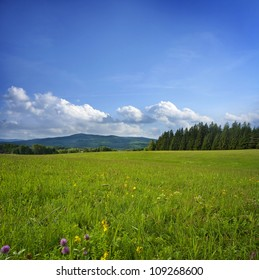 summer sunny day - mountain meadow