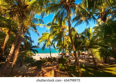 Summer. Sunny day. Noon. Cuba, the beach of Varadero Atlantic Ocean. Palm grove with coconut