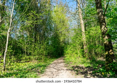 Summer sunny forest landscape with bright greenery, soft focus. A trail in the spring forest with sunlight and shadows. Green trees  and grass along the path in a nature park Almere, the Netherlands.