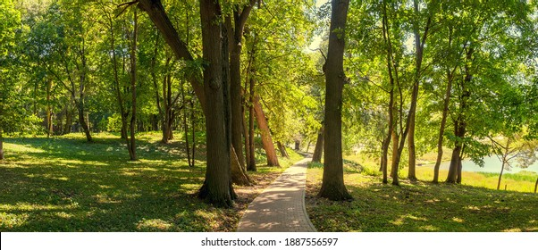 Summer sunny landscape with stone tile road passing between the old trees in shady park