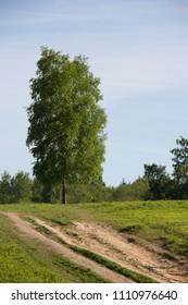 Summer sunny park landscape