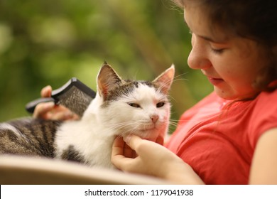 summer sunny photo of teenager girl grooming cat with brush close up photo