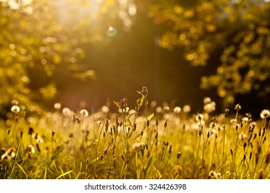 Summer Sunny Trees And Green Grass With Dandelions. Nature Woods Sunlight Background