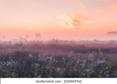 summer sunrise field of blooming pink meadow flowers