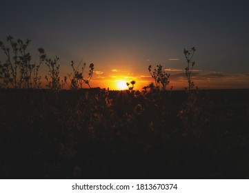 summer sunset in a field with outlines of flowers on the background of the sun