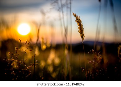 Summer Sunset in the Grass