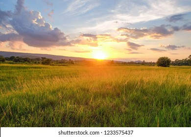 A summer sunset over grass field with lonely tree in Thailand.